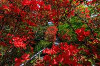 キリシマツツジと春の花咲く梅宮大社(前編) - 花景色-K.W.C. PhotoBlog