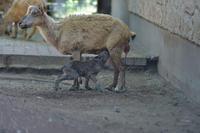 マーコールのこ - 動物園へ行こう