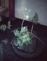 取り込んだ植物とメダカの赤ちゃん - 東京ベランダ通信