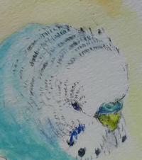 顔4連続 その3 - Blue & Yellow Budgie