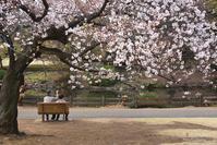 圧倒的桜。平成FINAL - + Spice to life