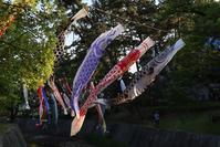 こいのぼり、子供達の元気がこいのぼりを踊らせる、五月の微風がこいのぼりを踊らせる・・・夙川公園のこいのぼりたち - 藤田八束の日記