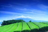 令和元年5月の富士(9)茶畑と雲に隠れた富士 - 富士への散歩道 ~撮影記~