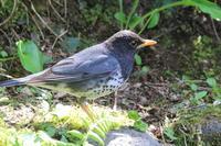 森の水場で - 今日の鳥さんⅡ