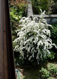 一風変わった花開花中・・・ - 【出逢いの花々】