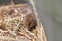 秋の井の頭~眼光鋭いノウサギとお食事カピバラ( September 2018) - 続々・動物園ありマス。