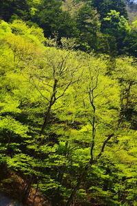 甲州丹波山村の新緑 - 風の香に誘われて 風景のふぉと缶