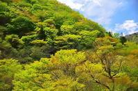 渓谷の新緑 - 風の香に誘われて 風景のふぉと缶