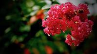 花の雫 - Paesaggio visto dal mirino della fotocamera