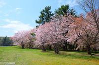 聖台ダムの桜VOL.2~令和元年5月 - My favorite ~Diary 3~