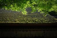 新緑の季節 - Fast Color