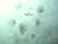 《皐月飛翔山背美》 - 『ヤマセミの谿から・・・ある谷の記憶と追想』