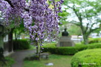 皐月の石山寺参道 - 「古都」大津 湖国から