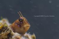 こんにちは - Diving Life ~Aita pe'a pe'a~