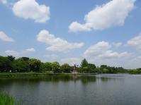 風車のある公園 - Magnolia Lane