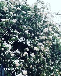 雪bolo天然酵母のパン -  Flower and cafe 花空間 ivory (アイボリー)