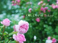 One Day in Tokyo:  バラが見頃です♪ - Cucina ACCA