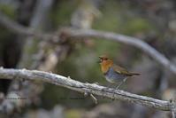 標高を上げ下げでこの春を知る - healing-bird
