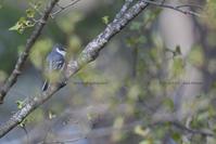 夏小鳥に会いたい - healing-bird