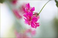 Pink - 我夢工房