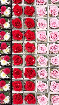 母の日☆ありがとうございました♪ - 東京世田谷区(桜新町) フラワーアレンジメント教室・フラワーギフト メイフェア・フラワーズ