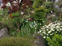 雨の前に - natural garden~ shueの庭いじりと日々の覚書き