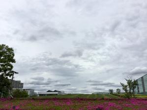 いつものここ、空とツツジ - pantaya2_カエルの体操