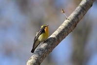 夏鳥盛りだくさん!今週のウトナイ湖 - やぁやぁ。