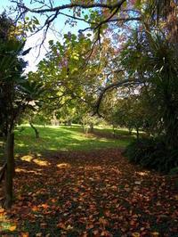 5月、秋、とりとめなく/Warm Fall, May in New Zealand - アメリカからニュージーランドへ