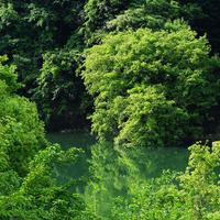 信楽の新緑 - Photo Break