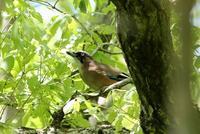 あちこちで撮った野鳥 - 暮らしの中で