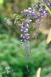 フジの花が咲くころ - 自然がいっぱい4