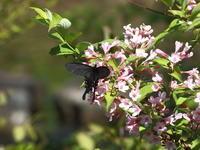 フジの花が咲くころその3 - 自然がいっぱい4