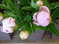 昨日仕入れたお花たち - フラワーショップデリカの花日記