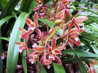 キンリョウヘン(金稜辺)の花 - しらこばとWeblog