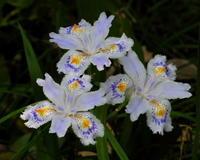 ガーデンで花とチョウ(5月4日の在庫から) - 星の小父さまフォトつづり