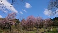 道民の森 is Beautiful! - 秀岳荘みんなのブログ!!