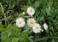 許可なく勝手に咲く花たち - 【出逢いの花々】