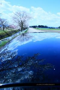 圧倒的桜。平成FINAL 2019年春 - 虹のむこうには何が見える?