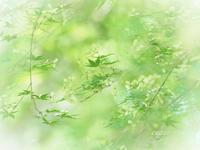 若楓 - 瞳の記憶