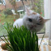 猫との日々 - 土筆の庭