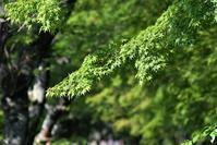 桜並木の面々・・・ - 鳥と共に日々是好日