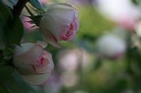 今日の空中庭園@西武池袋店 - meの写真はザンス