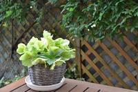 スローテンポな菜園の住民たち - refresh-3