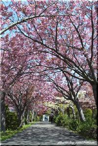 二色のトンネル(平岡樹芸センター) - 北海道photo一撮り旅