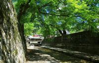 木漏れ日 - ゆる鉄旅情