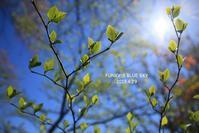 またね♪ - FUNKY'S BLUE SKY