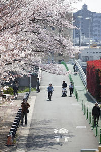 圧倒的桜。平成FINAL -Hometown- - jinsnap(weblog on a snap shot)