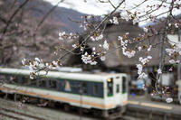 圧倒的桜。平成FINAL ~Go to Tohoku -Station- - jinsnap(weblog on a snap shot)