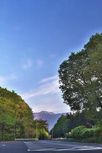 一週間遅れの山桜 - 雅郎の花鳥風月